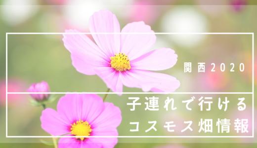 【関西】子連れで行けるコスモス畑情報【2020年】